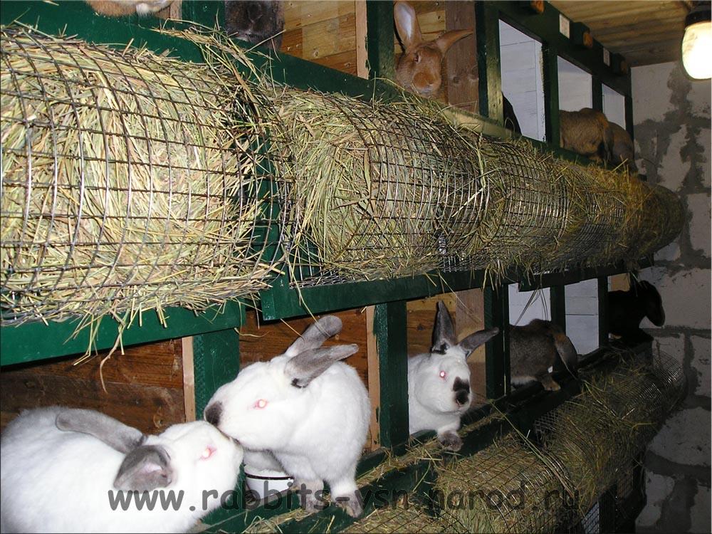 Стоимость выращивания кроликов 89